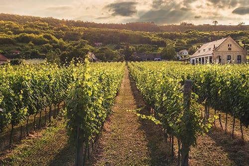 Winery - mount etna tour mount etna wine tasting sicily tour sicily shore excursion